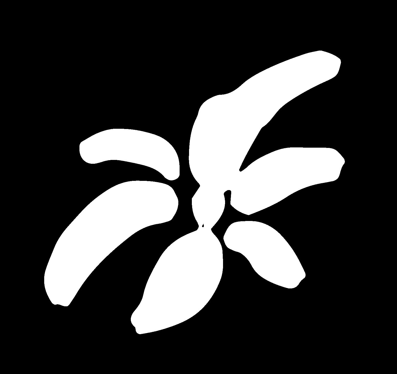 fleur-blanche-lyvia